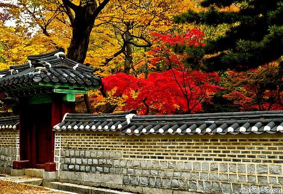Du Lịch Hàn Quốc Seoul Jeju Nami Giá Rẻ